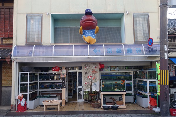 Taishogun shopping street Kyoto Gyoen (Goldfish, carp, tropical fish-breeding equipment)