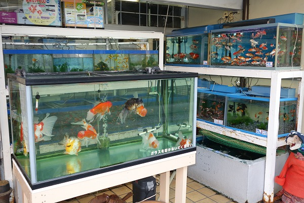 大將軍商場 京都一条妖怪街 京都魚苑