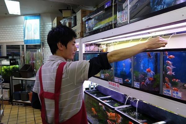 大将軍商店街 京都魚苑
